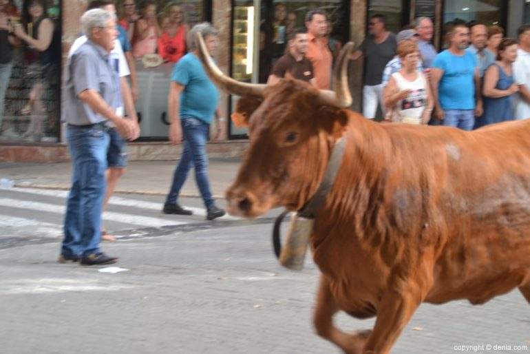 Primer día de fiestas de Dénia 2018 - Entrada de toros
