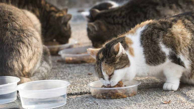 Cats eating in a bowl