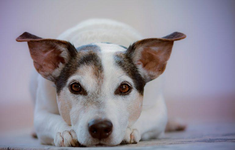 Saladar Veterinary Dogs