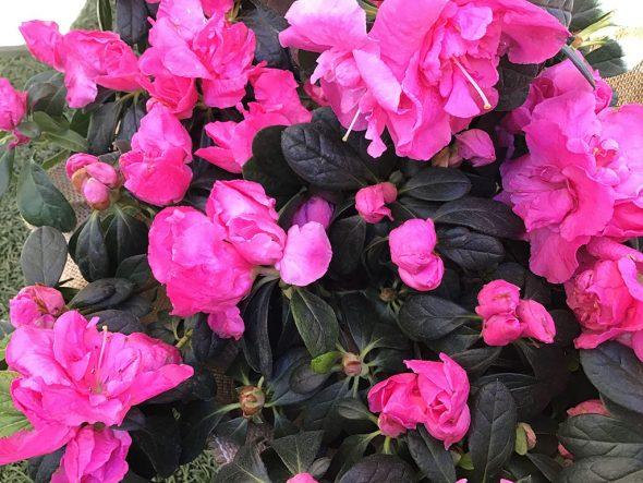Este San Valentin Regala Las Plantas Y Flores Que Mas Enamoran En