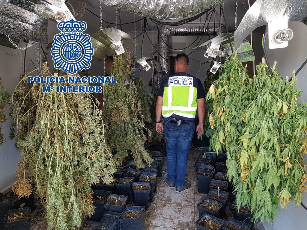Марихуаны новости про плантация организма из сколько выходит марихуана
