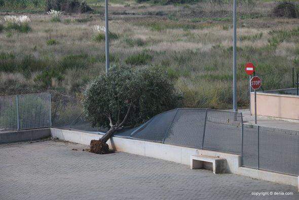 Imagen: Árbol caído en el patio del CdT