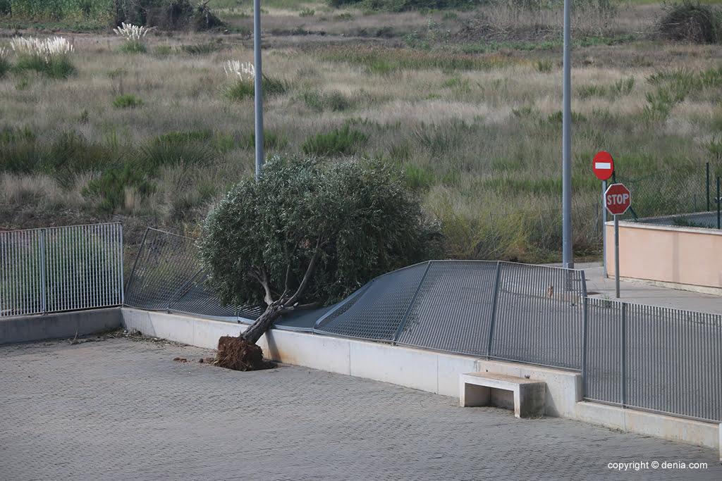 Árbol caído en el patio del CdT