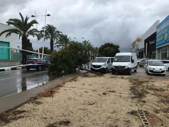 Image: Fallen tree on the Dénia-Ondara road invading the traffic lane