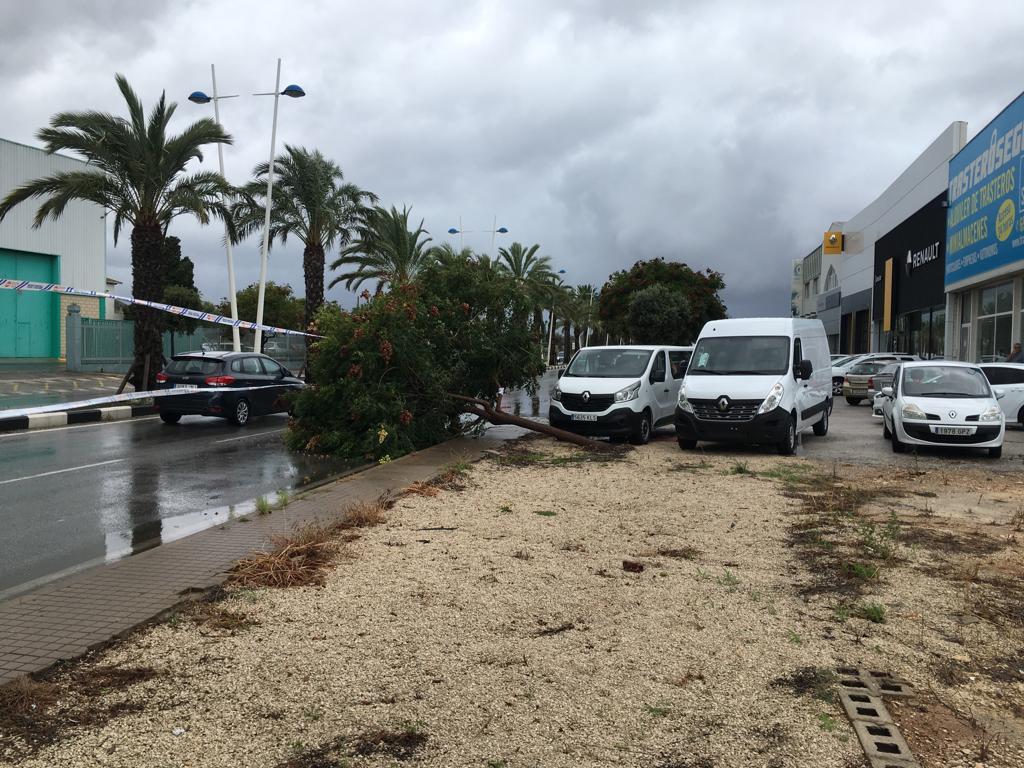 Arbre tombé sur la route Dénia-Ondara envahissant la voie de circulation