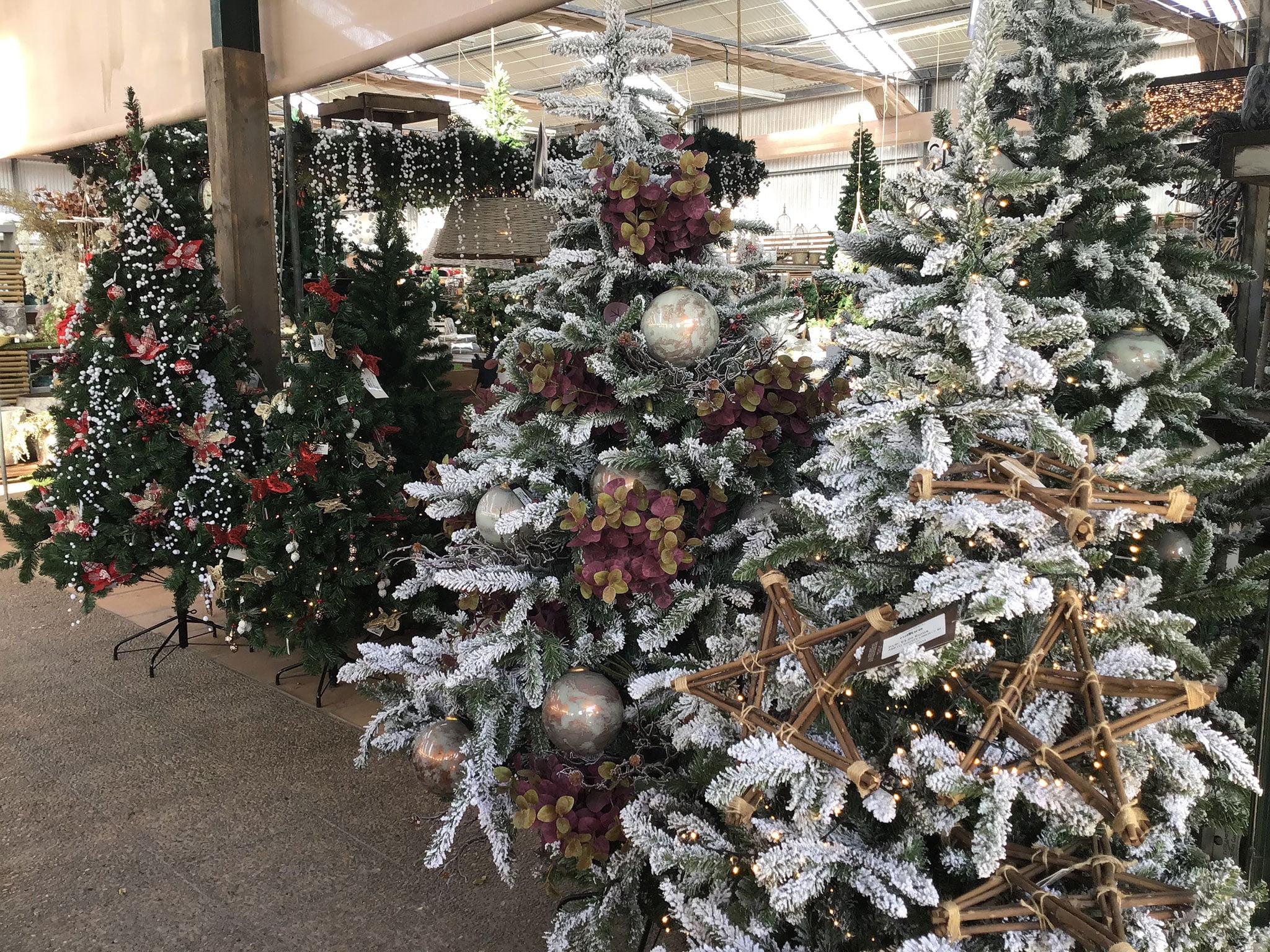 Comprar árboles de navidad en Dénia – Natura Garden