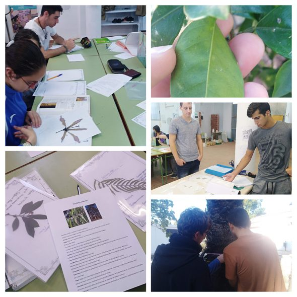 Image: Inventory of species by Creama students