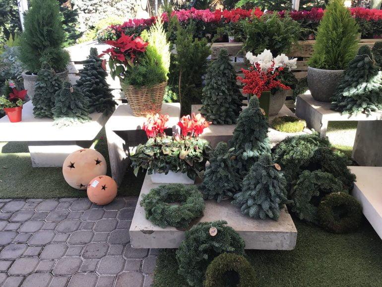 Plantas de navidad en Natura Garden