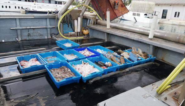 Image: Collecte de plastiques sur le marché aux poissons