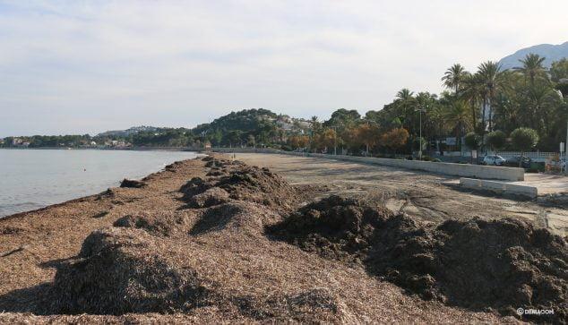 Image: Mur d'algues dans la Marineta la veille