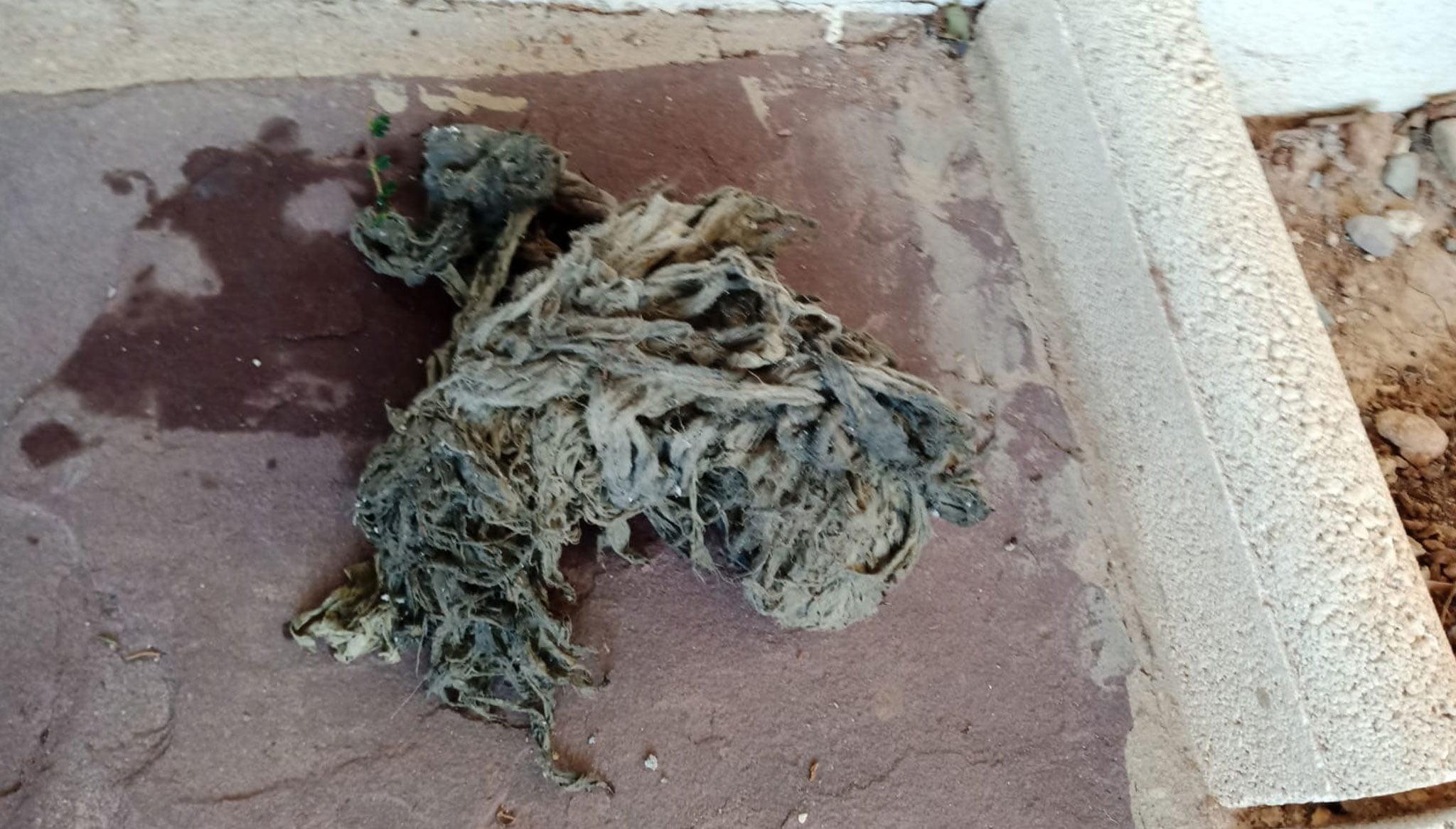 Acumulación de toallitas extraídas de un desagüe – Gesdenia