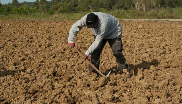 Imagen: Agricultor
