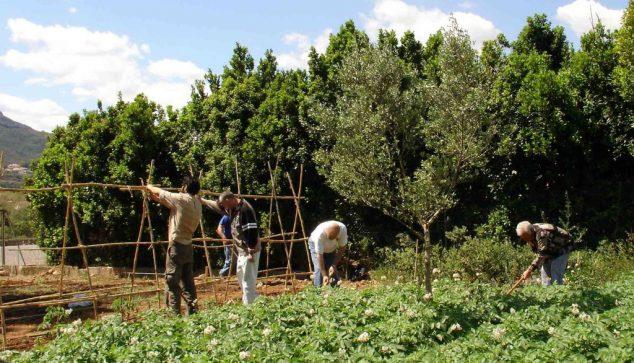 Imagen: Agricultores en Dénia