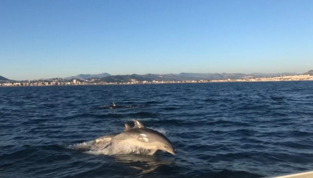Image: Dolphins in front of Xàbia | Sam Kelly photo