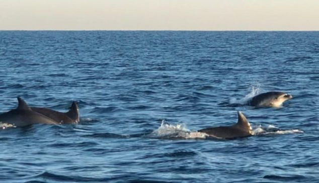 Image: Group of dolphins sighted in front of the region | Sam Kelly photo