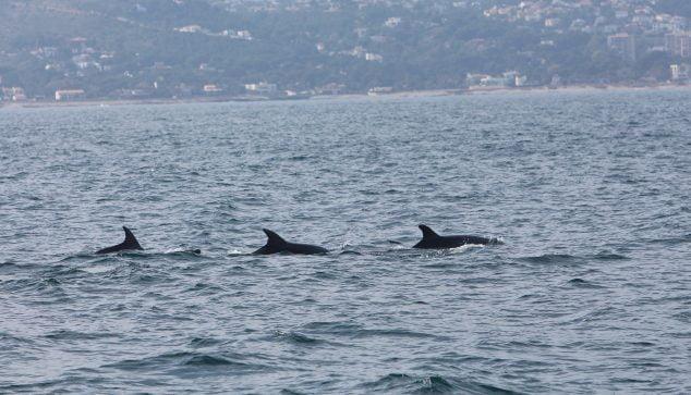 Image: Groupe de dauphins sur la côte de Dianense