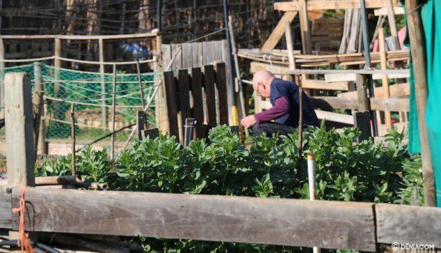 Imagen: Hombre trabajando en su huerto dianense