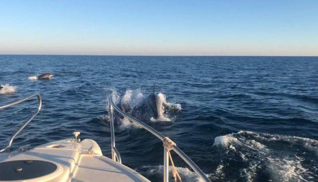 Image: Dolphins chase boats | Sam Kelly photo
