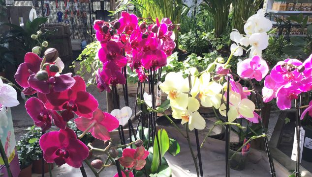 Image: Orchids of different colors - Natura Garden