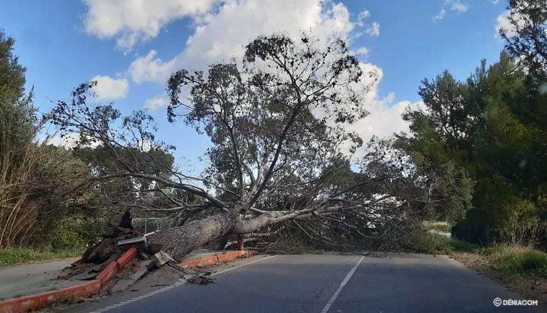 Árbol caído en la carretera de Ondara