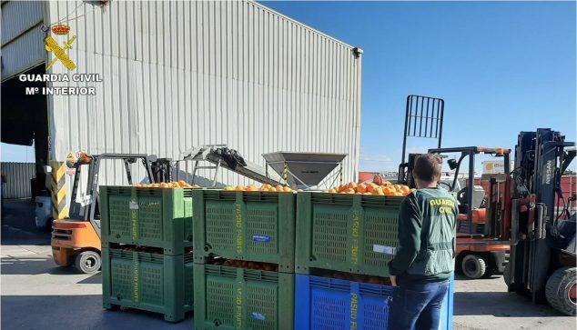Imagen: Naranjas requisadas Equipo ROCA