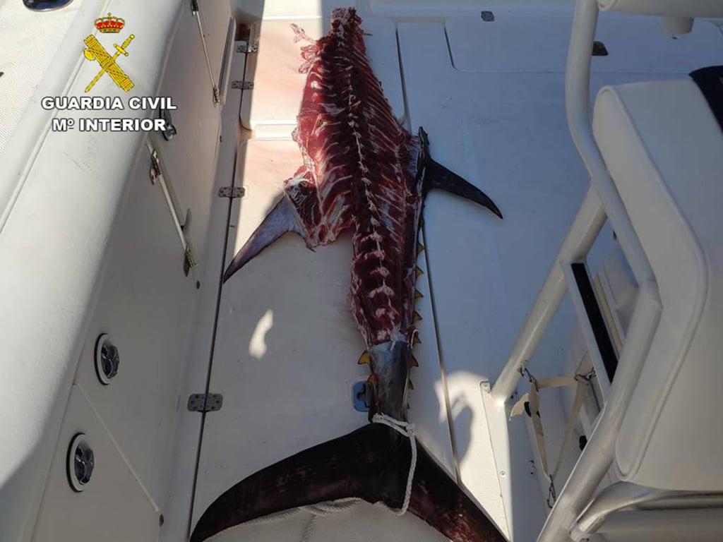 Bluefin tuna caught
