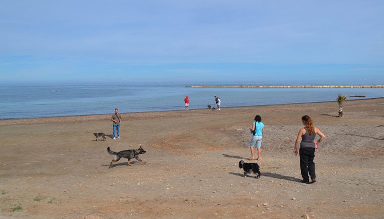 Dogs on the beaches of Dénia