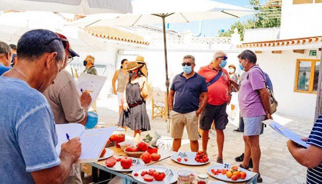 Imagen: Cata de tomates en Els Magazinos