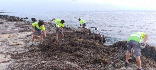 Image: Removal of algae on the beaches of Dénia