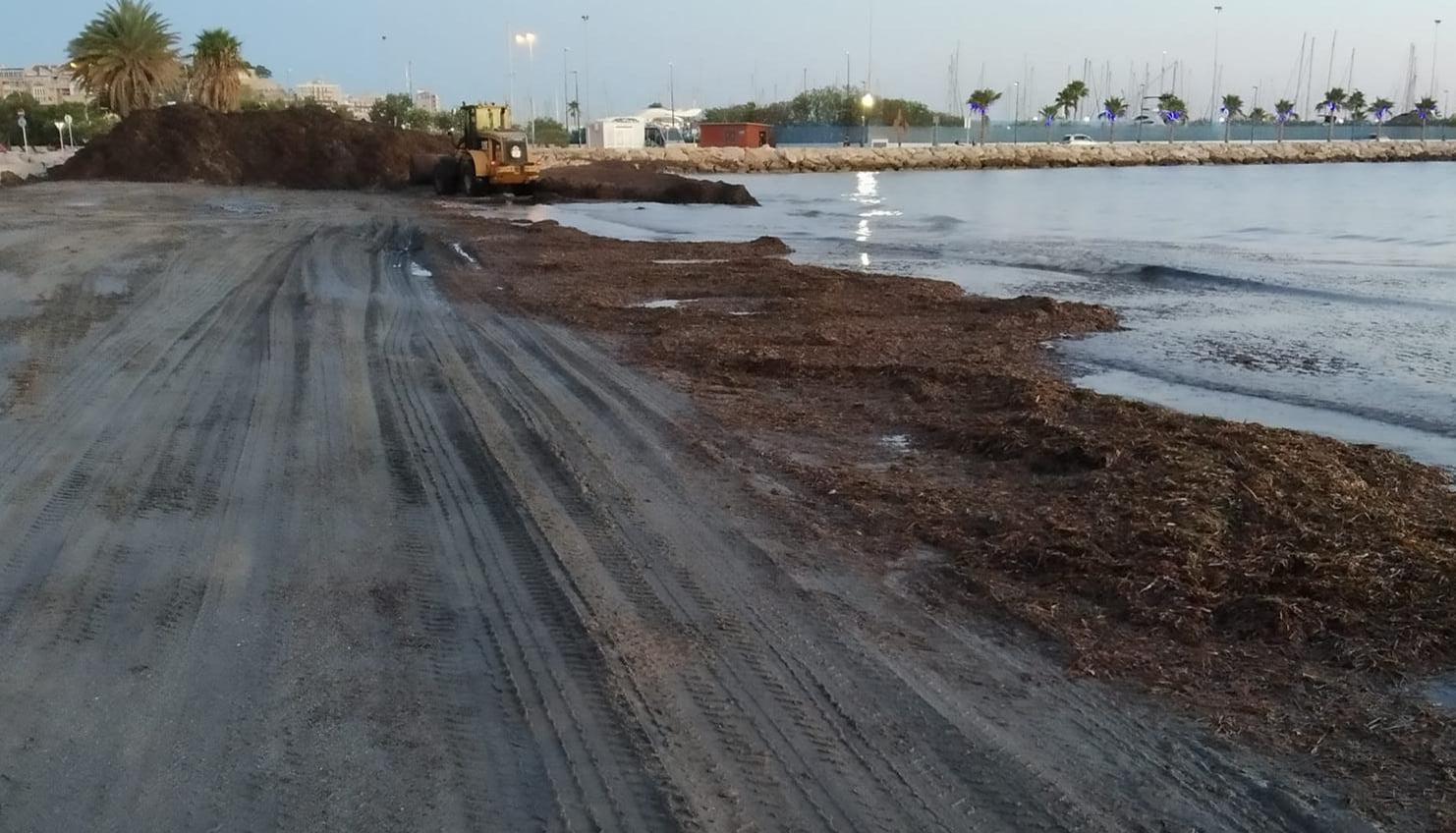 Limpieza de algas en la Marineta Cassiana