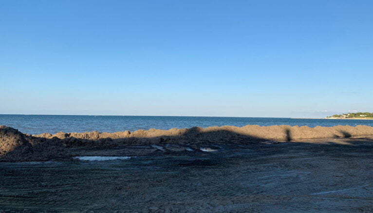 Barrera de posidonia en la Marineta
