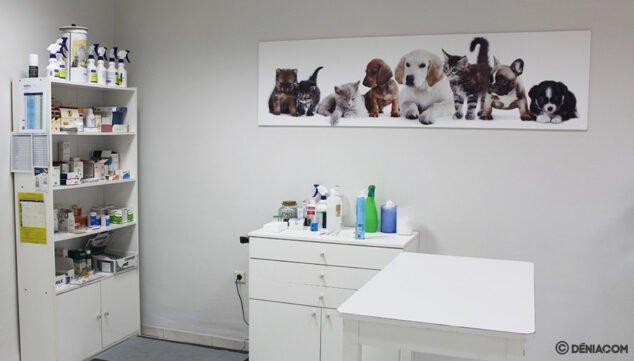 Imagen: Ponle el chip a tu perro en Dénia - Clínica Veterinaria Saladar