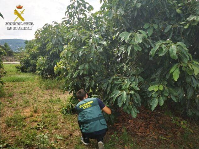 Imagen: Agente del equipo ROCA en uno de los cultivos
