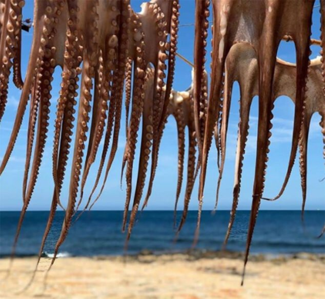 Image: Octopus drying in the sun (Image from the Sendra Restaurant social networks)