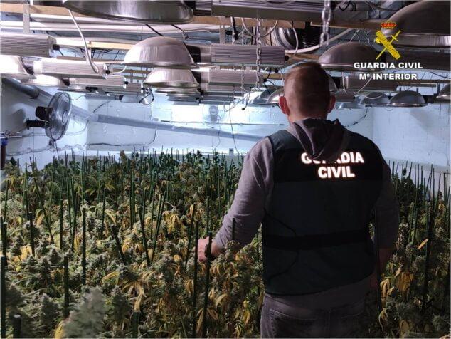 Imagen: Plantación de marihuana en el sótano