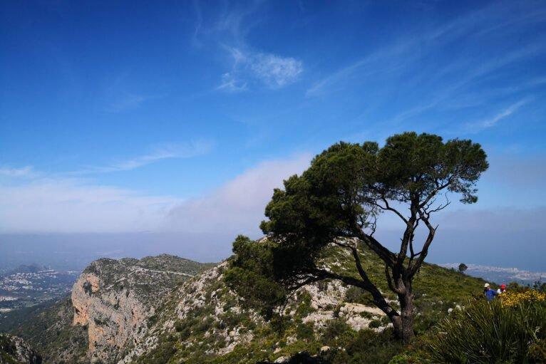 Árbol en un precipicio, en la ruta de ascenso a la Creueta del Montgó