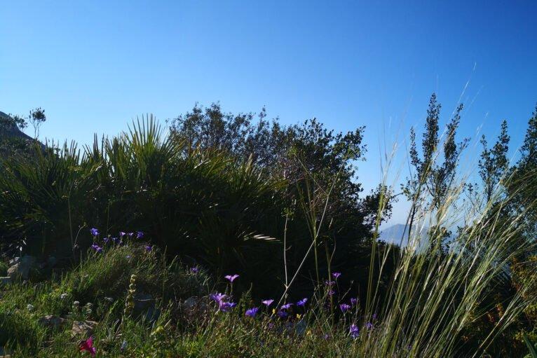 Vegetación arbustiva durante el recorrido de ascenso a la Creueta del Montgó