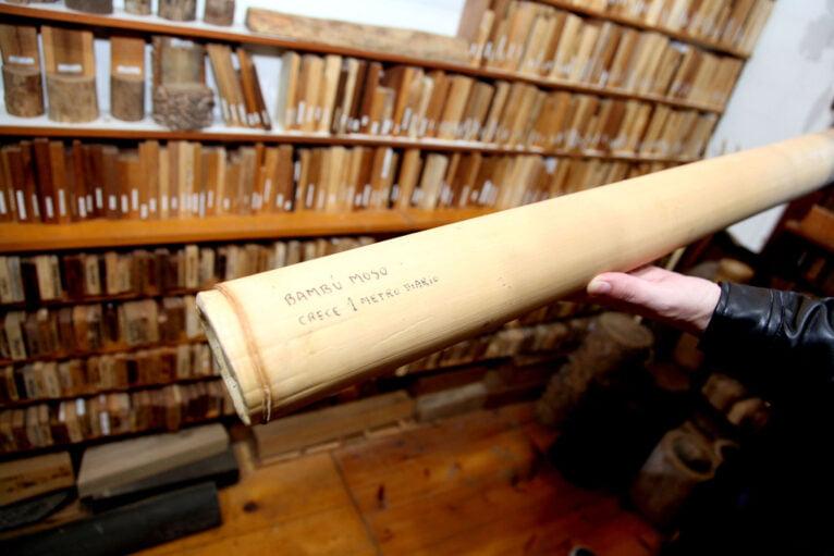 Especie de bambú que crece un metro a diario