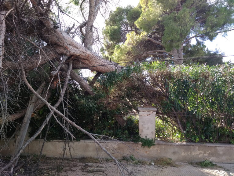 Fallen tree in front of the Nautical Club
