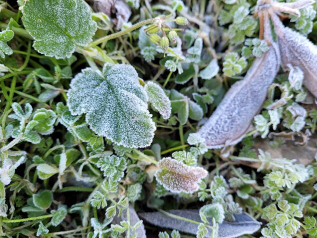 Image: Frozen leaves in Dénia
