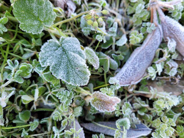 Imagen: Hojas congeladas en Dénia