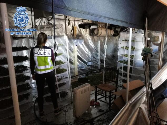 Image: Plantation en intérieur dans un chalet à Jesús Pobre