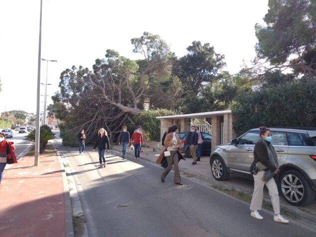 Imatge: Trànsit tancat davant de l'Nàutic per la caiguda d'un arbre