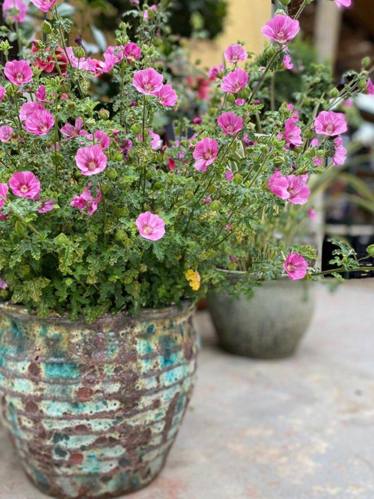 Floral details on Valentine's Day - Natura Garden