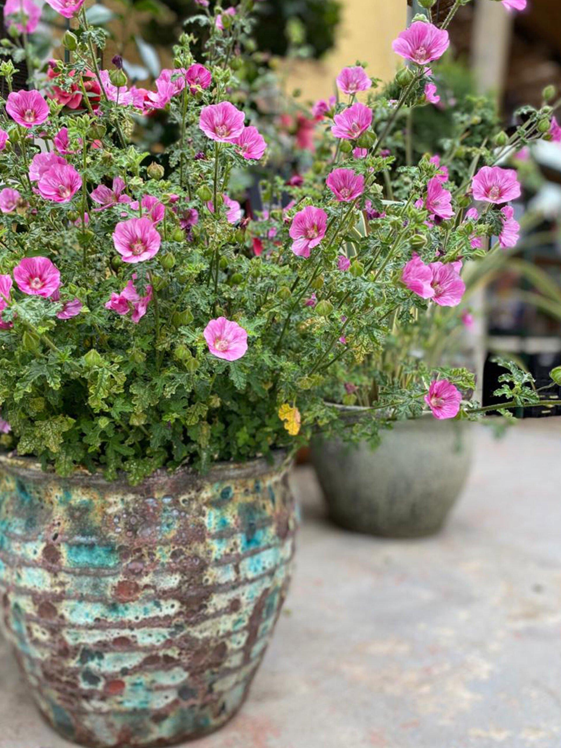 Détails floraux pour la Saint-Valentin - Natura Garden