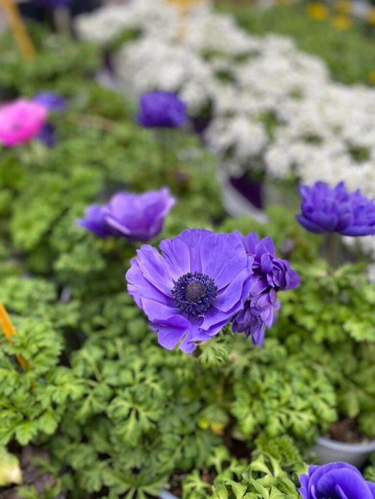 Des détails naturels pour la Saint-Valentin - Natura Garden