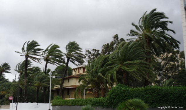 Image: The wind hits the trees in Dénia