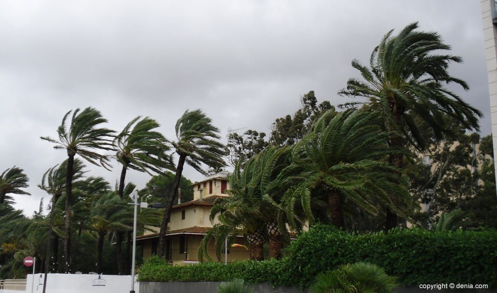 The wind hits the trees in Dénia