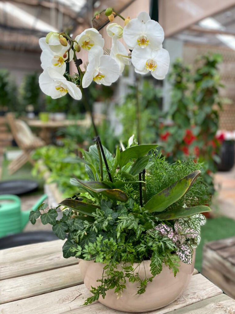 Give an orchid for Valentine's Day in Dénia - Natura Garden