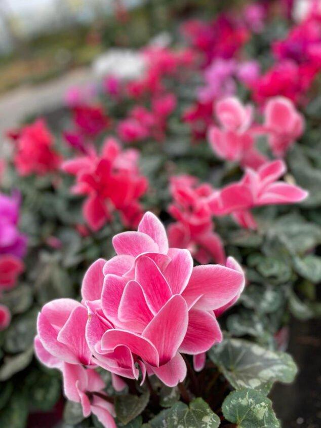 Imagen: Regalos para San Valentín en Dénia - Natura Garden